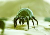 Ces petites bêtes qui provoquent des allergies