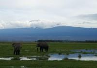 Partir en aventure au Kenya pour faire du safari dans ses parcs et réserves