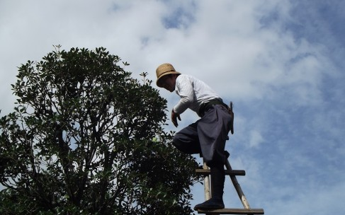 L'entretien de vos arbres par un élagueur professionnel