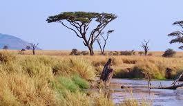 Les particularités d'un voyage en Tanzanie