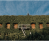 Soyez plus proche de la nature avec une toiture végétalisée!